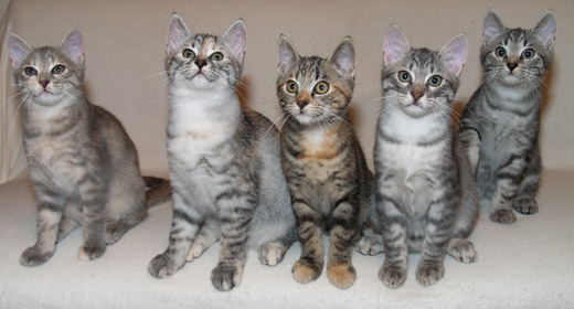 B litter, from left to right: Basia, Beatrice, Bellissima, Benajmin and Balthasar, 13 weeks